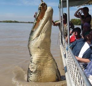 Crocodilo de 5,5 metros