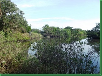 Bulow Creek &  Tamoka SP (45)_thumb[2]