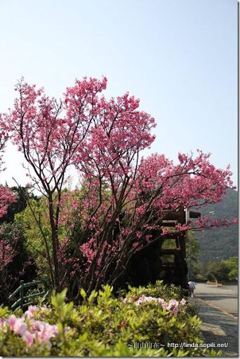 2010陽明山花季-第二停車場