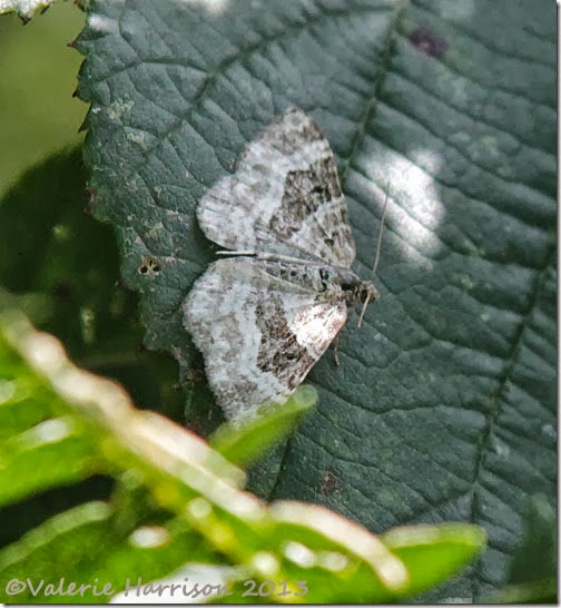 4-common-carpet