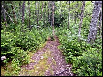 04v2 -  Hike - Thompson Trail to Bog Trail