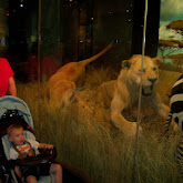 Houston Museum of Natural Science - 116_2773.JPG