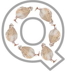 Q Quail