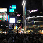 shibuya crossing by night in Tokyo, Tokyo, Japan