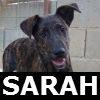 ficha sarah