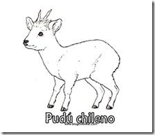 pudus chileno (9)