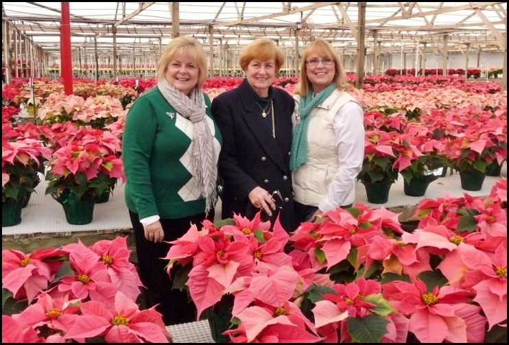 poinsettia farm2011 003 (800x600)
