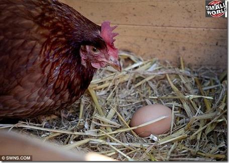 ipad-galinha-4