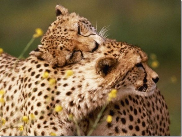 cute-funny-animals-36