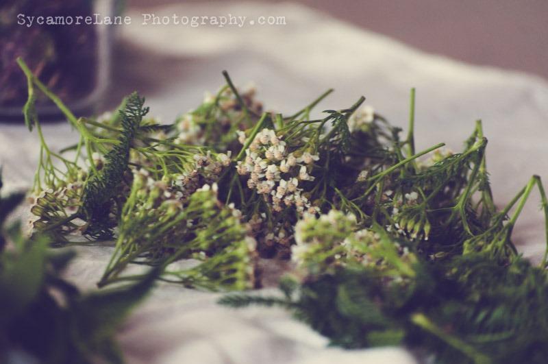 SycamoreLane Photography-Herbs (4)