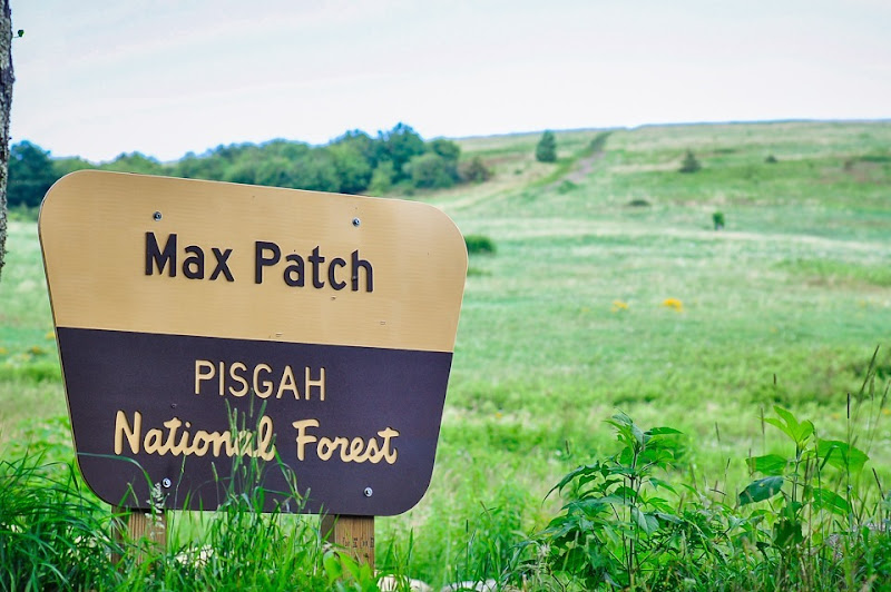 Max Patch-7086