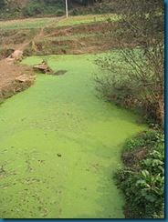 220px-River_algae_Sichuan