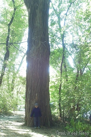 M in front of a giant cottonwood tree