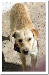 Jan.2012 dogs 016-1