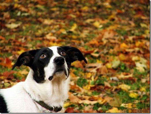 dogs_005