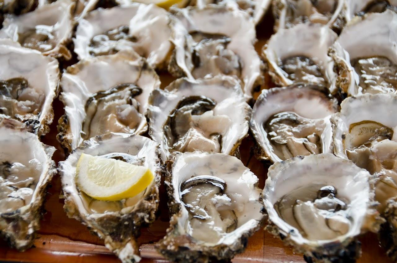 Oysters at Delta de l'Ebre