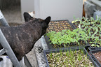 I'm looking at all of the seedlings that are growing.