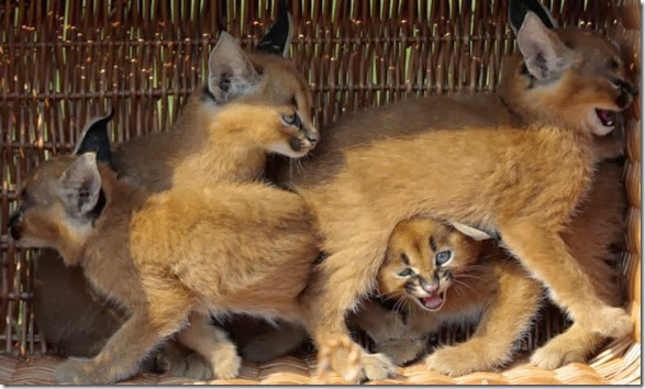 cute-baby-animals-19