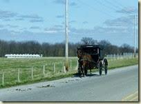 Amish Buggy (3)