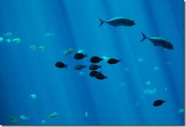 ATL aquarium 050