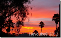Bentsen Palm Sunrise 3
