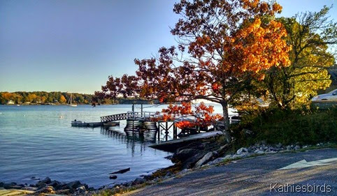 1. 10-12-14 autumn dock