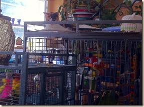 Murphy & birds