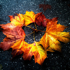 autumn circle by Emina Dedić - Instagram & Mobile Other ( orange, autumn leaves, fall colors, yellow, road, circle, close up, fall leaves, nature, autumn, fall, nostalgic, end )