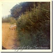 Billevænge campingplads Langeland 1967