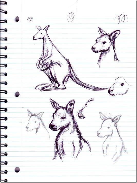 kangaroo-sketch