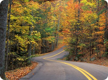 Autumn Colors Road