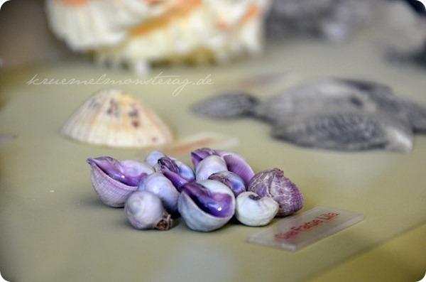 Wremen 20zwölf Tag 5 Muschelmuseum (20)