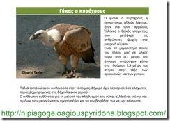 τα ζώα της Κύπρου(8)