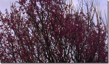 螢幕快照 2013-03-16 下午12.19.09