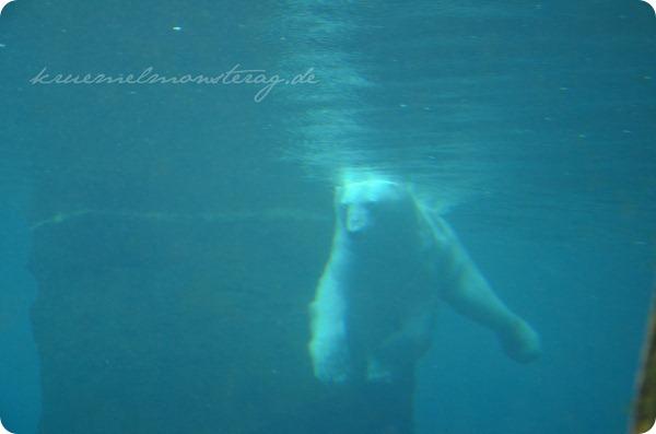 Wremen 20zwölf Tag 6 Zoo am Meer - Eisbär UW (2)