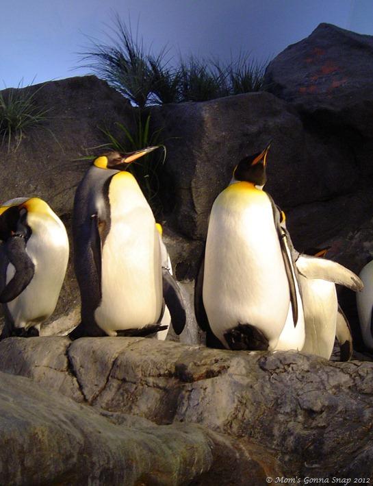 2004-04-07 St. Louis Zoo (42)