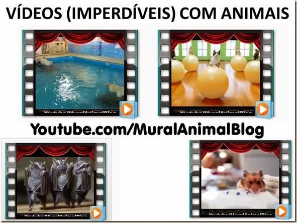 VÍDEOS (IMPERDÍVEIS) COM ANIMAIS