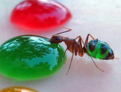 translucent-ants-1