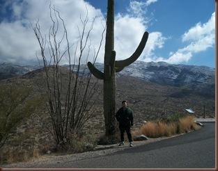 Saguaro06