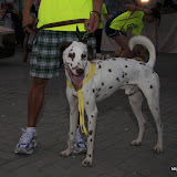 Pet Express Doggie Run 2012 Philippines. Jpg (10).JPG