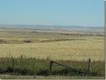 03.Flat prairie