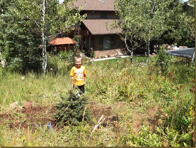 Tree planting Connor's tree