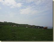 06.Vacas