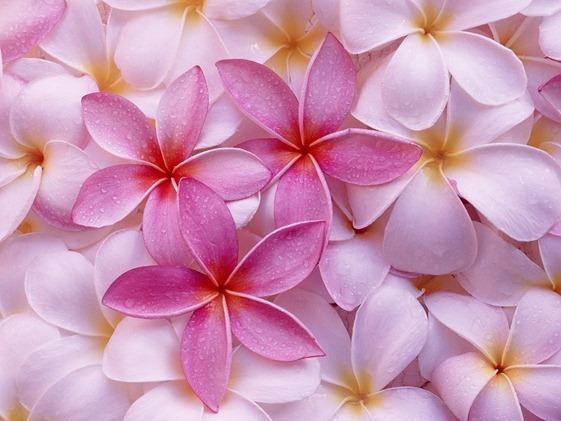 flowers00225