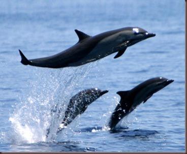 Amazing Pictures of Animals.  Dolphins, Cetacea, Delfin. Alex  (10)