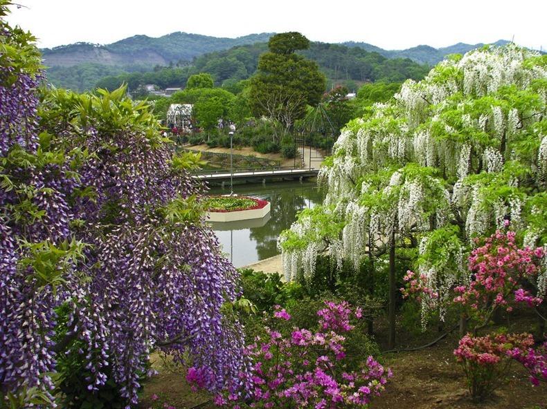 ashikaga-flower-park-11