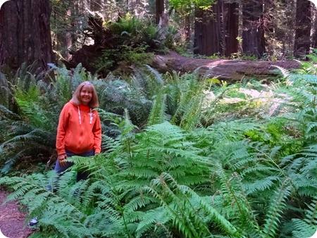 forest foor