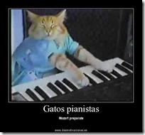 gato pianista blogdeimagenes (26)