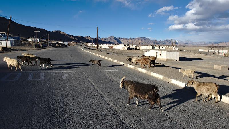 Ora serii si caprele traversand strada principala.