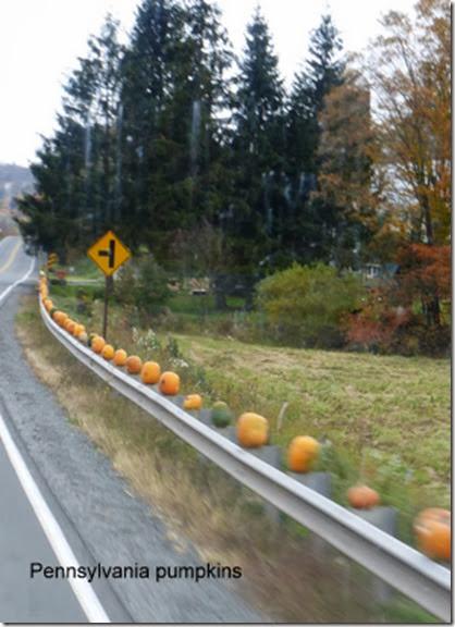 Pennsylvania pumpkins